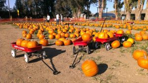 pumpkins-2013-14
