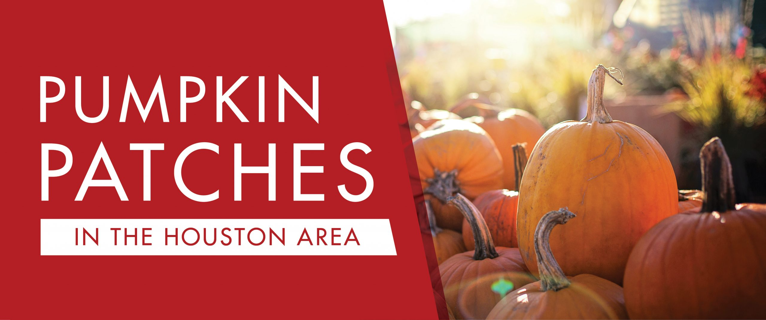 Houston-Area Fall Pumpkin Patch Guide