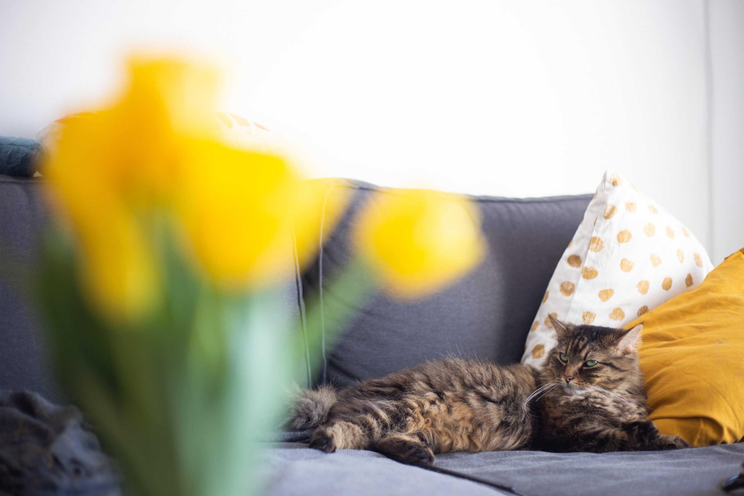 Cheap And Easy Staging Tips Odors