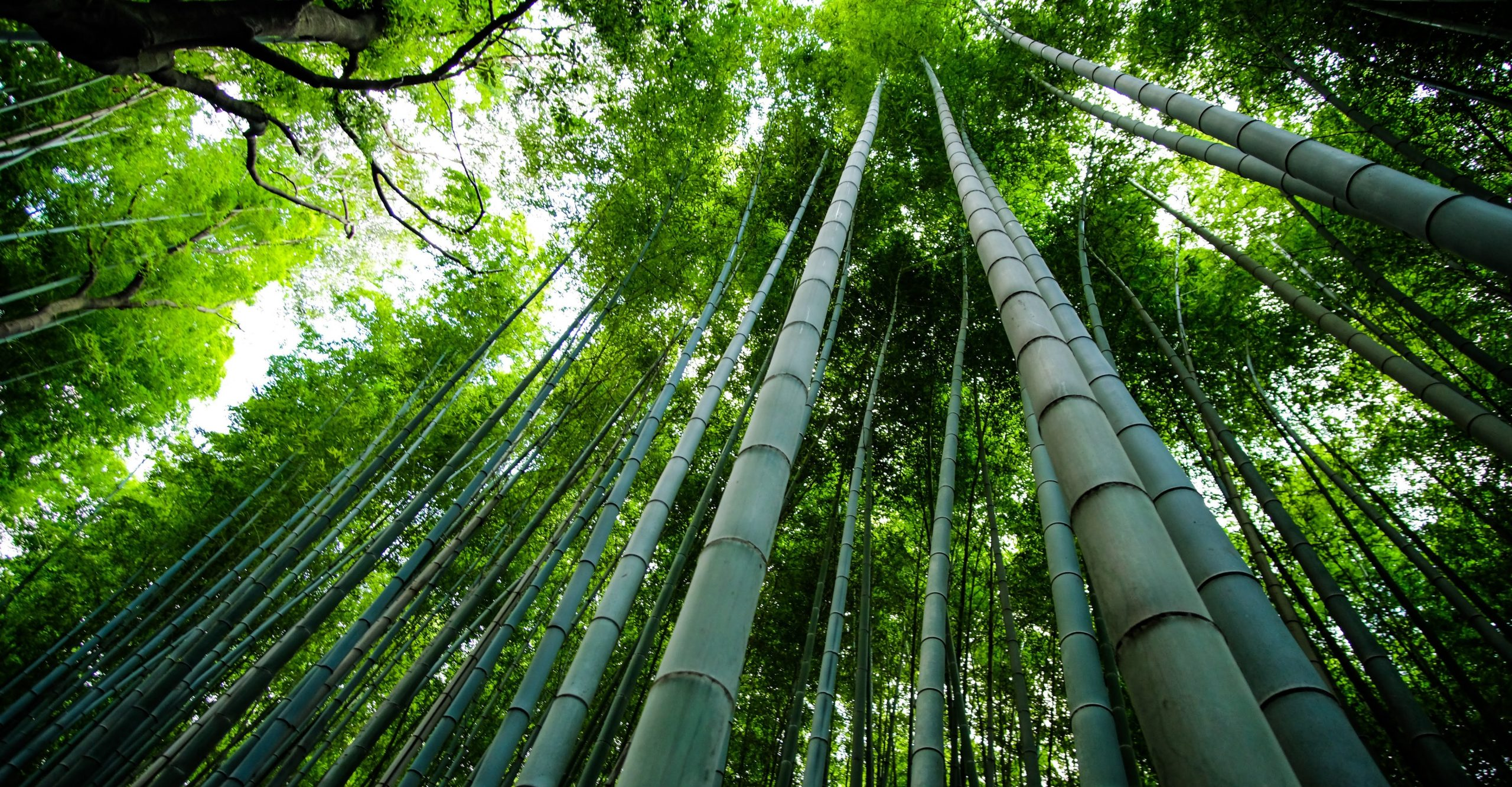 Use Bamboo To Build Homes