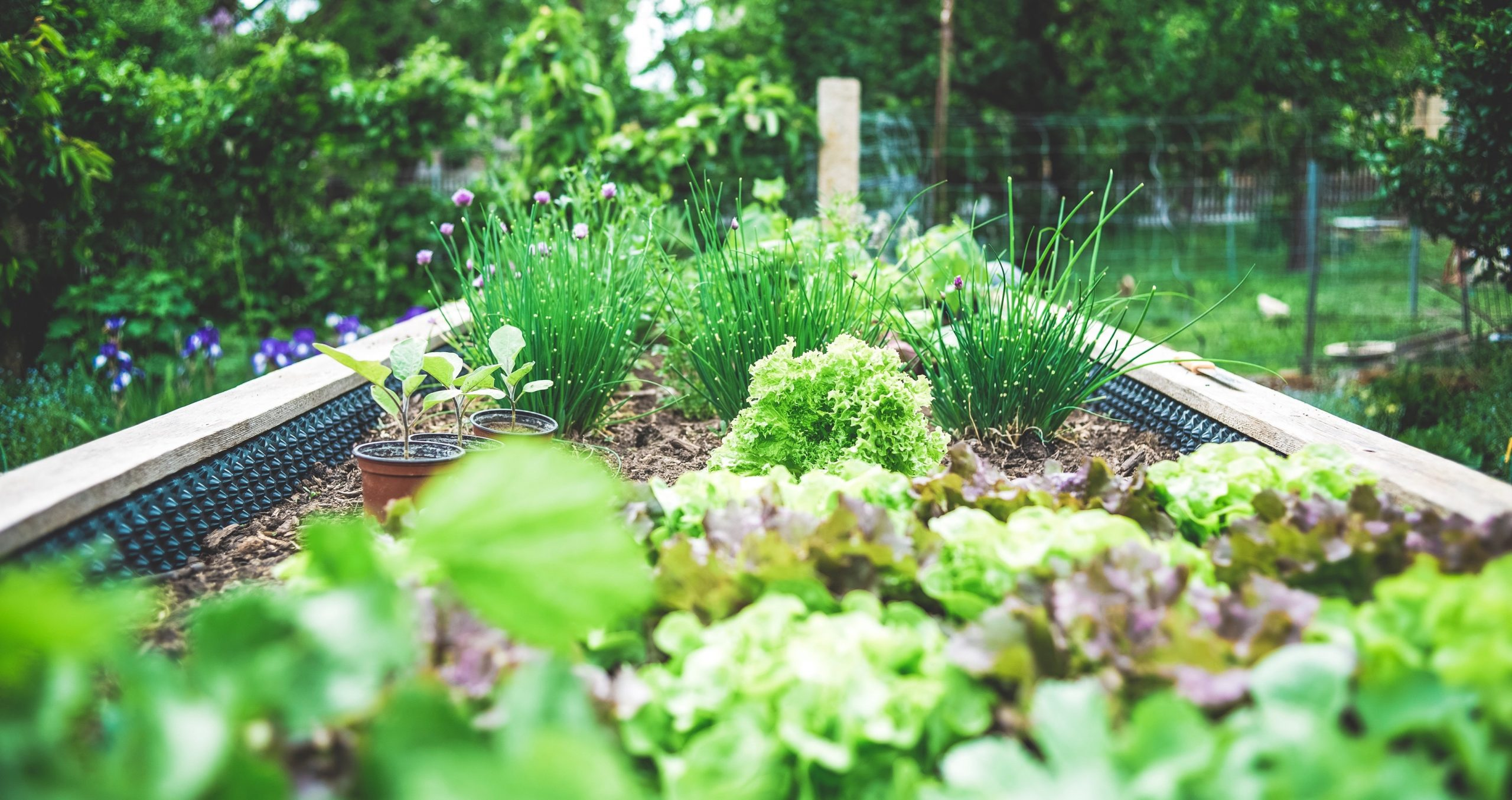 Home Garden and Curb Appeal